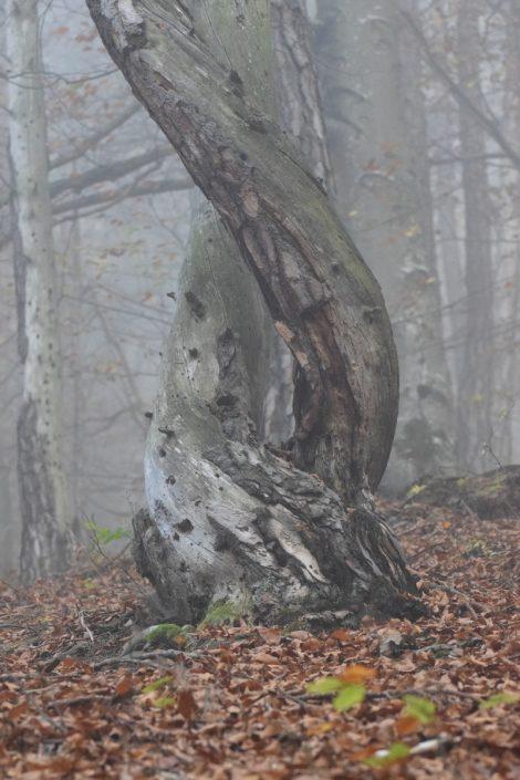 Ošťadnický Anton - Milenci v rannej hmle